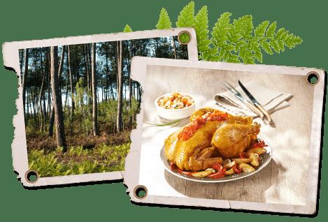 Landes et gastronomie du sud ouest